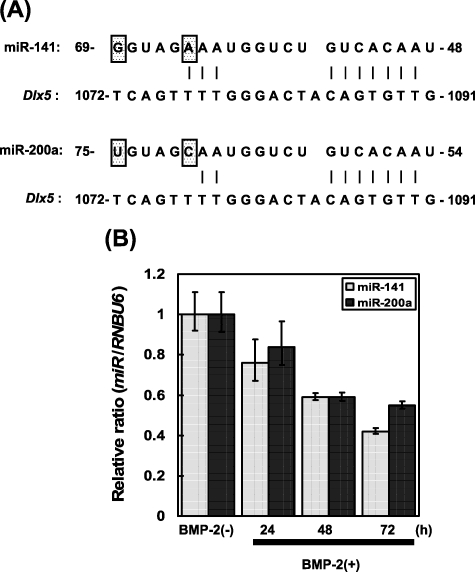 MicroRNA-141 and -200a are involved in bone morphogenetic protein-2-induced mouse pre-osteoblast differentiation by targeting distal-less homeobox 5.