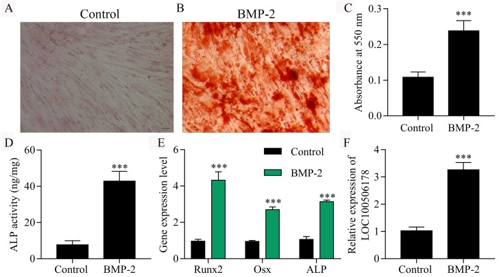 Evaluation of BMP-2 minicircle DNA for enhanced bone engineering and regeneration